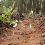 """""""Zasadź się na zdrowie"""" i przyłącz do sadzenia drzew. Akcja odbywa się w lasach całej Polski, także na Warmii i Mazurach"""