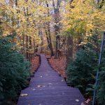 Prawie 300 stopni prowadzi na szczyt. Czy nowe schody na Górę Klasztorną staną się magnesem dla turystów?