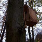Popielice i orzesznice mają własne… osiedle. Leśnicy z Elbląga chronią zagrożone gatunki
