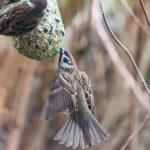 Czym karmić ptaki, żeby im nie zaszkodzić? Dokarmianie zwierząt nie jest takie proste. W Ełku stanęły specjalne tablice informacyjne
