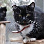 W Olecku ruszyła bezpłatna sterylizacja kotów i psów