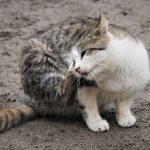 Giżycki samorząd dokarmia bezpańskie koty. Każdy może przyjść po darmową karmę
