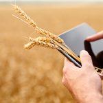 Są pieniądze na nawadnianie gospodarstw. Jakie warunki muszą spełnić rolnicy?