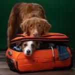 Zwierzę w podróży