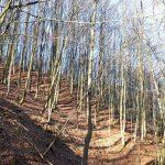 Bardzo sucho w lasach regionu. Wprowadzono najwyższy stopień zagrożenia pożarem