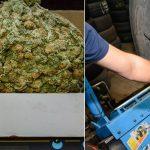 Narkotyki z Hiszpanii miały trafić do Polski. Strażnicy graniczni przejęli towar wart 2 miliony złotych