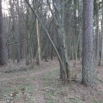 Olsztyński las miejski dalej dostępny dla odwiedzających. Sprawdź, gdzie możemy wybrać się na spacer