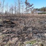 Celowe podpalenie czy przypadkowe zaprószenie ognia? Spaliło się 10 arów trawy w lesie koło Malborka
