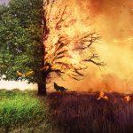 Bezmyślność może być bardzo kosztowna. Wypalanie traw niesie za sobą wielkie zagrożenie