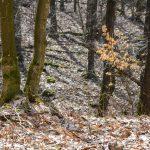 Nadleśnictwo Elbląg ostrzega: w lasach jest bardzo sucho. Obowiązuje najwyższy stopień zagrożenia pożarowego