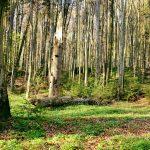 Jeśli pogoda się nie zmieni, konieczne będzie zamknięcie lasów