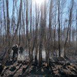 """Strażacy z Warmii i Mazur pomogą gasić pożar w Biebrzańskim Parku Narodowym. """"W lasach jest bardzo sucho"""""""