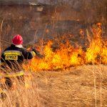 Zamiast pomagać w walce z koronawirusem muszą gasić płonące trawy. Za ich wypalanie grożą dotkliwe kary