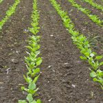 Najwięcej gospodarstw ekologicznych znajduje się w województwie warmińsko-mazurskim