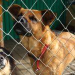 Dasz piątaka dla Zwierzaka? Rusza nowa akcja wspierająca psy i koty ze schronisk na Warmii i Mazurach