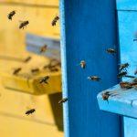 """Otruł pszczoły sąsiada, bo chciał, by """"wyleciały ze swoich domków"""". Straty wynoszą prawie 13 tysięcy złotych"""