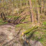 Elbląscy leśnicy przygotowują kolejne szlaki. Trwają wiosenne porządki w lasach