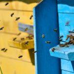 Pszczelarze z Warmii i Mazur stawiają domki do apiterapii. Powietrze z ula lekiem na osłabienie i stres