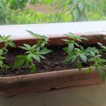 Amfetamina i marihuana w mieszkaniu 39-latka z Pisza. Łącznie narkotyki były warte 34 tys. złotych