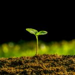 Weź pieniądze na posadzenie lasu. ARiMR oferuje wsparcie finansowe