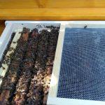 Nowy trend w leczeniu produktami pszczelimi – oddychanie powietrzem z ula