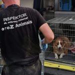 Już drugi dzień policja, prokuratura i obrońcy zwierząt pracują w Radysach. W schronisku trwa akcja ratowania zwierząt