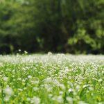 """W Elblągu powstają kolejne łąki kwietne. Ratusz: """"Poprawiamy bioróżnorodność"""""""