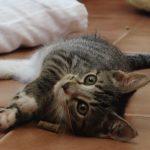 Schronisko dla zwierząt w Elblągu prosi o pomoc