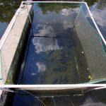 """ARiMR: w środę koniec naboru """"suszowych"""" wniosków dla producentów ryb"""