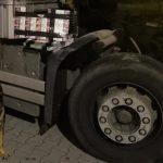 Specjalnie wyszkolone psy w służbie KAS. Udaremniły przemyt prawie 13 tysięcy sztuk papierosów