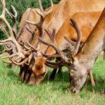 Multisensoryczna wystawa w Kosewie Górnym. Na zdjęciach jeden dzień z życia jeleniowatych