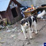 Zaniedbane szczenięta na jednej z olsztyńskich posesji. Zwierzęta są już w schronisku