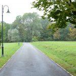Aleja prowadząca do Nadleśnictwa Elbląg zostanie wycięta. Na miejscu chorych drzew zostaną zasadzone nowe