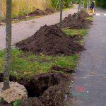 Lipy zastąpią topole i dęby. Nad Jeziorem Długim w Olsztynie posadzono ponad 70 nowych drzew