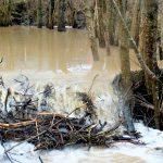 Inżynieria wodna według bobrów. Zobacz, co zarejestrowała leśna fotopułapka