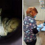 Wilk, który wpadł we wnyki w Puszczy Piskiej, trafił do ośrodka rehabilitacji i jest już po operacji