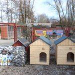 Osadzeni pomagają bezdomnym zwierzętom