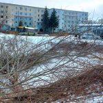 Społecznicy zbierają podpisy. Chcą, by władze Olsztyna bardziej dbały o zieleń