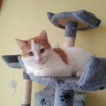 Blaski i cienie życia miejskich kotów