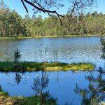 Lasy, Jeziora, Rzeki – Nadleśnictwo Wipsowo