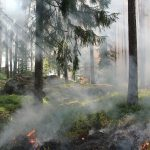 Upał i susza. W wielu lasach obowiązuje najwyższy stopień zagrożenia pożarowego