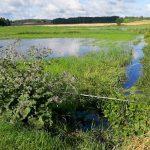 Cofka na rzece Łynie. Woda zalała łąki w Bartągu