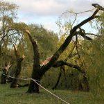 Nawałnica w Olsztynie i regionie: połamane drzewa, uszkodzone samochody i dachy. W kraju ofiary śmiertelne