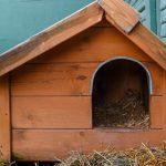 Bartoszyce zadbają o koty wolno żyjące. W mieście pojawią się specjalne domki