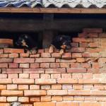 Psi horror w Wołownie
