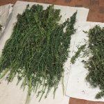Zabezpieczono ponad 5 kilogramów narkotyków. Jej wartość to blisko 160 tysięcy złotych
