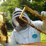 Pszczelarze i rolnicy mogą liczyć na pomoc finansową. Ma zrekompensować straty poniesione w 2020 roku