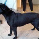 Właściciel zagłodził psa na śmierć. Drugi jest w stanie skrajnego wycieńczenia